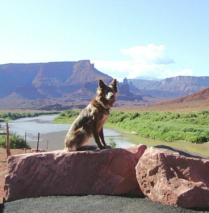 Famous American Indian Dogs