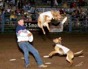 High Flying Dogs