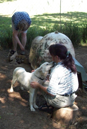 Shasta and pups